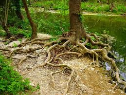 Don't Let The Issue Develop Roots