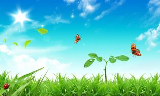 Plant a Seed to Achieve Your Dreams